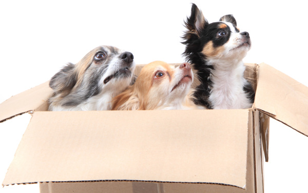 Three dogs in a paper box